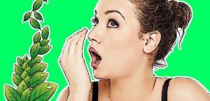 ağız kokusunu ne geçirir