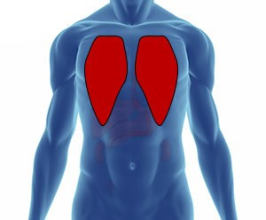akciğer nerede