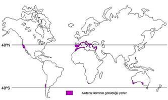 Akdeniz ikliminin görüldüğü yerler