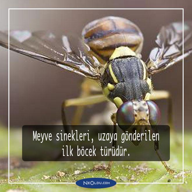 böcekler hakkında bilgi