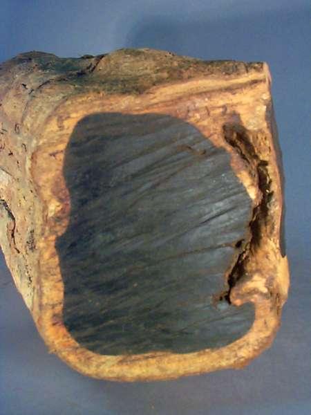 Odunu sert ve siyah olan ağaç türü