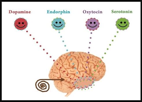 endorin dopamin serotonin oksitosin