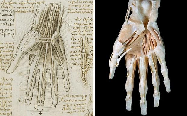 davinci anatomi
