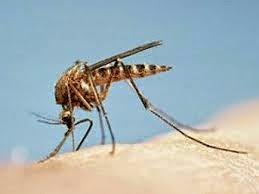 sivrisinek ilaçları