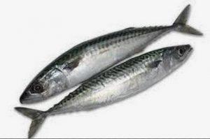 CodyCross bulmaca uskumru balığının küçüğü