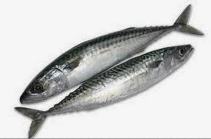 Uskumru balığının en küçük hali