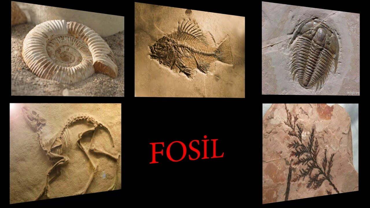 fosilleri inceleyen bilim adamına ne denir