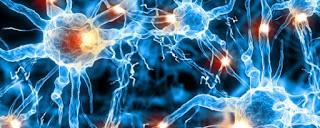 beyin hucrelerimiz surekli oluyorlar mi