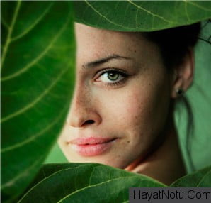 bitkisel arbutin nedir cilde faydalari nelerdir cilt lekelerini nasil onler