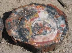 fosil-goruntusu