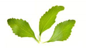 stevia bitkisi üretimi, stevia bitkisi kullanımı, stevia bitkisi nerede bulunur, stevia bitkisi ekimi, stevia bitkisi fidesi, stevia bitkisi rize, stevia bitkisi şeker hastalığı