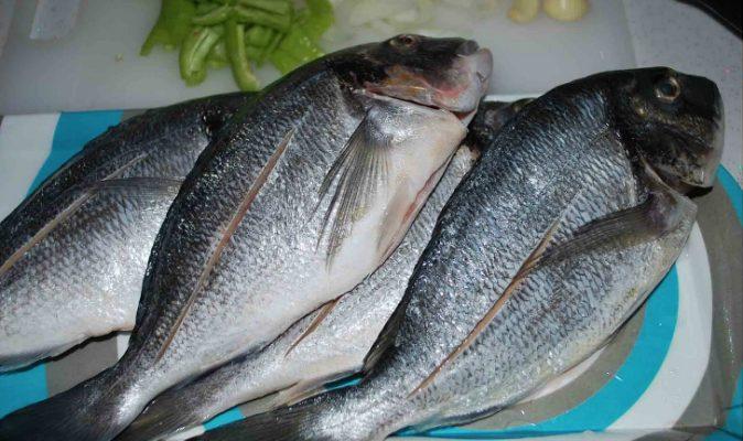 Ege denizinde yaşayan balık türleri