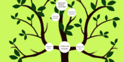 Soy ağacı nedir resimlerle soy ağacı projesi ödevi hakkında bilgi kısa özet