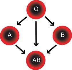 kan grubuna gore karakter ozellikleri